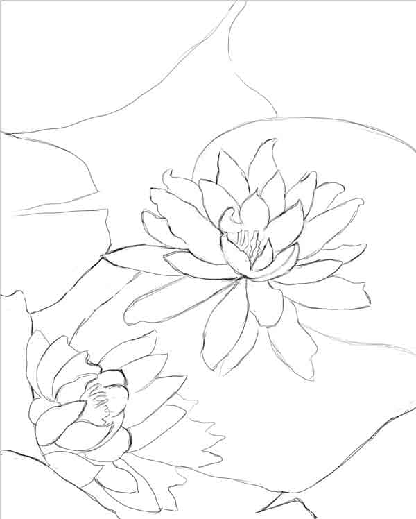 Water lilies sketch  sm